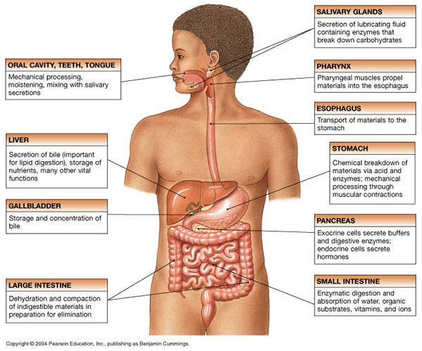 Biology gcse science revision ccuart Image collections
